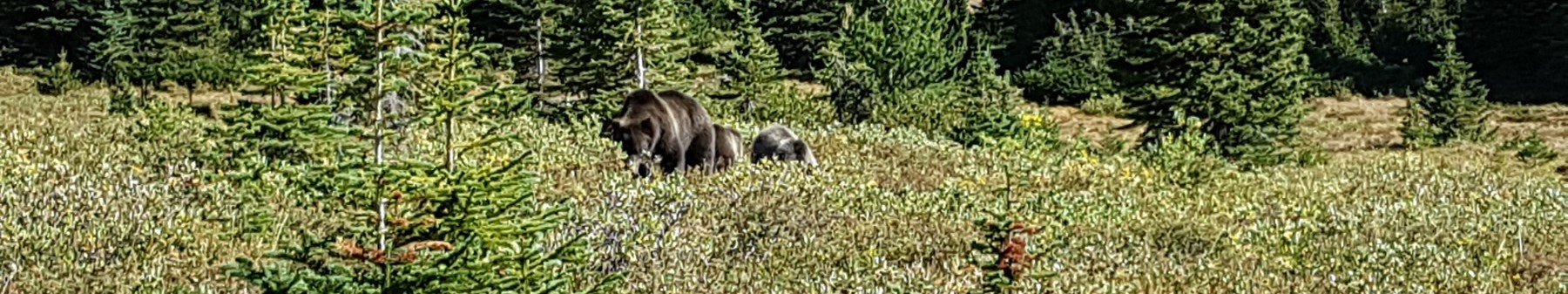 Family of Bears - Credit Jaleen